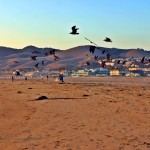 Pismo Beach Sunset Activities